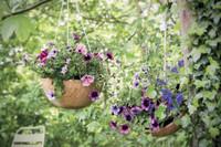 Mit Petunien, Verbena und Schneeflockenblumen die Sonne begrüßen: Drei Gestaltungsideen für einen kreativen Garten