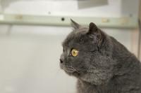 Chronische Nierenerkrankung bei Katzen – Nieren-Check: Mehr Lebensqualität dank Früherkennung