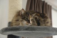 Wenn die Katze niest und schnieft: Katzenschnupfen – immer ein Fall für den Tierarzt!